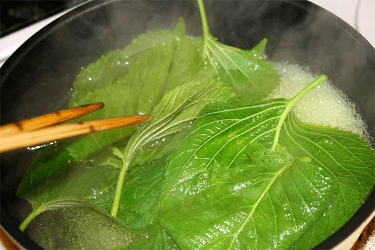 Nấu nước lá tía tô để tắm, xông hơi sẽ giúp giảm triệu chứng bệnh nhanh chóng